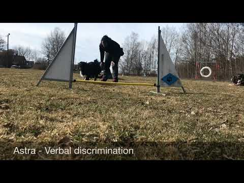 Agility verbal discrimination left/right/backside