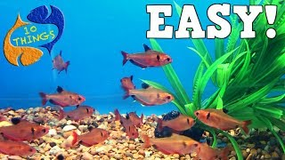 Top 10 Aquarium Fish For Begin…