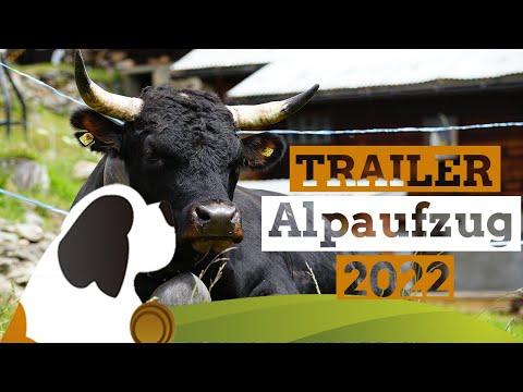 Alpaufzug Guggialp 2022