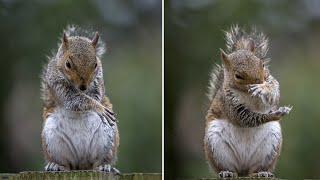 TikTok - charlie the funny cute squirrel Videos Compilation #12    Koko animals