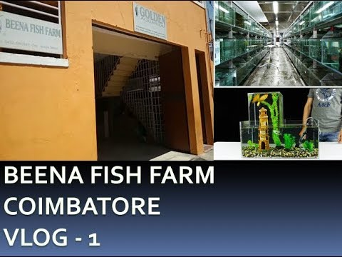 Beena fish farm Coimbatore - VLog -1