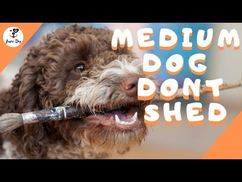 Top 10 Medium Sized Dogs That Don't Shed