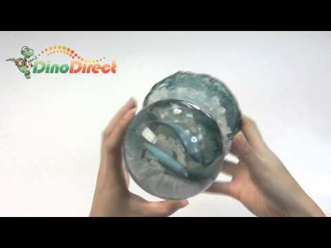 Dolphin Resin Base Decorative Figures Music Snow Globe  from Dinodirect.com