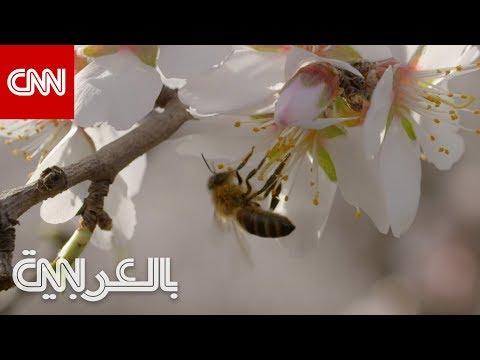 شركة ناشئة تعمل على جعل النحل أكثر ذكاء.. ما سرها؟  - نشر قبل 2 ساعة