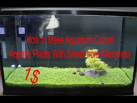 How To Make Aquarium Carpet. Aquatic Plants With Seeds From Aliexpress