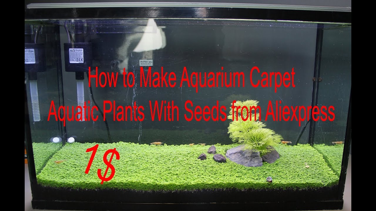 How to Make Aquarium Carpet  Aquatic Plants With Seeds from Aliexpress