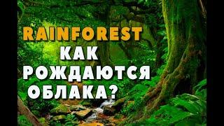 Rainforest. как рождаются облака. How do clauds born? Carpathian forests.