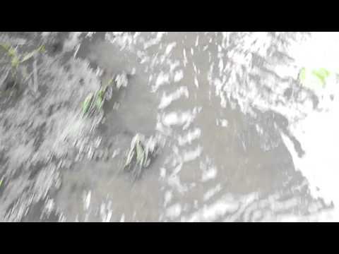 Погода в Кирове: тестируем лужи