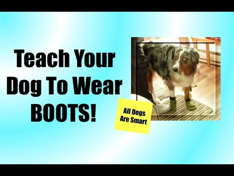 Teach Your Dog to Wear Boots with the Clicker!