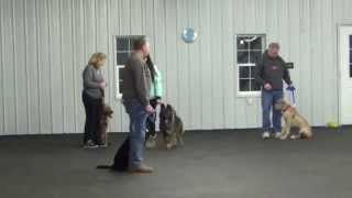 World Class Dog Kennels, Obedience Classes Chicago Il.