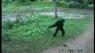 Monkey teases Dog