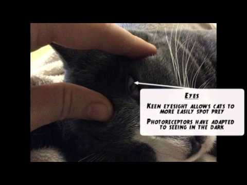 Adaptations of the Domestic Cat - YouTube