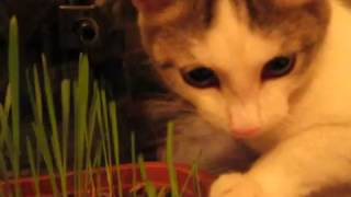 Витамины для котёнка