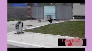 Funny animals #5