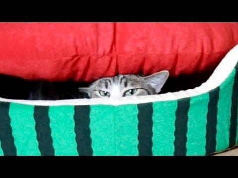 猫の果肉アタック – Cat Sneak Attack!! –