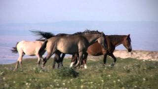 Pryor Mountain Wild Horses