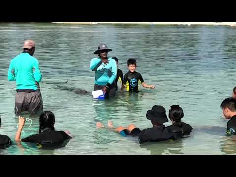 Dolphin Cay - Dolphin In Shallow Water Interaction At Atlantis Resort, Bahamas