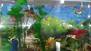 Fish aquarium cute | aquarium fish | most beautiful aquarium fish