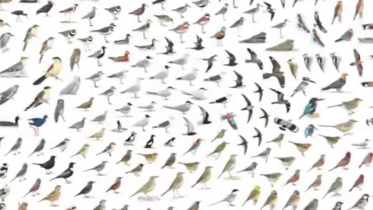 collins bird guide app english teaser trailer youtube rh youtube com collins bird guide android collins bird guide lars svensson