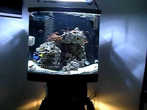 Jbj 28 Gallon Nano Cube Doovi