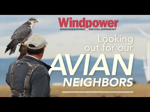 Working To Keep Wildlife Away From Wind Turbines