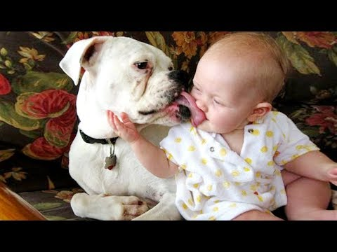 Babies And Dogs Are Kissing Together | Funny And Fails Videos
