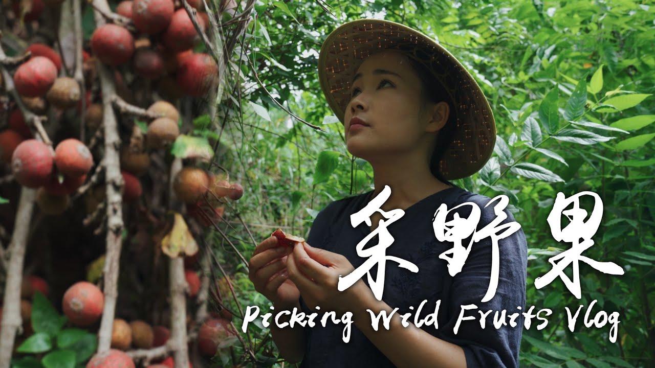 阿盆姐的Vlog|带着大王,到云南深山里采藏在树根里的蜜果~【滇西小哥】
