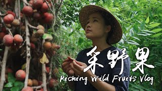 Apenjie's Vlog|Picking a wild fruit hidden among the roots of trees on the mountain with Dawang