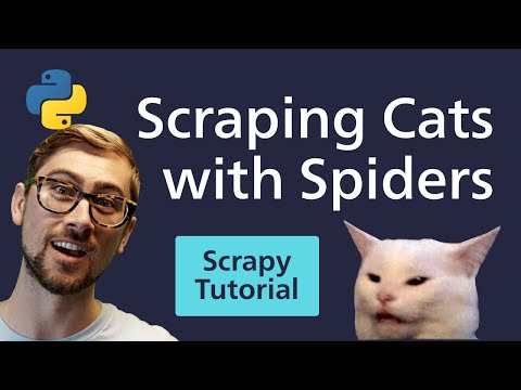 Python Scrapy Tutorial - Cats & Spiders? Web Scraping Reddit with Scrapy [2020]