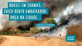 Brasil em chamas; Chico Bento embaixador; onça na cidade e mais notícias... - VERDE MAR #61