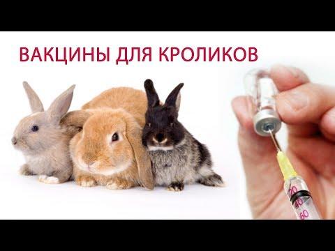 Обзор болезней глаз у кроликов и их лечения
