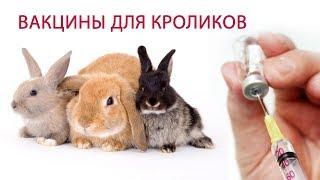 ВАКЦИНАЦИЯ КРОЛИКОВ (часть 2) \\ Какие болезни прививать и какие вакцины для кроликов выбрать