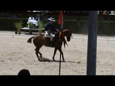 Antonio Cruz Coronel con Bombay CVNA Jerez 2012 doma vaquera