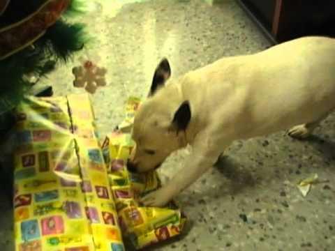 Dia de Reyes 2012. Petete abre sus regalos