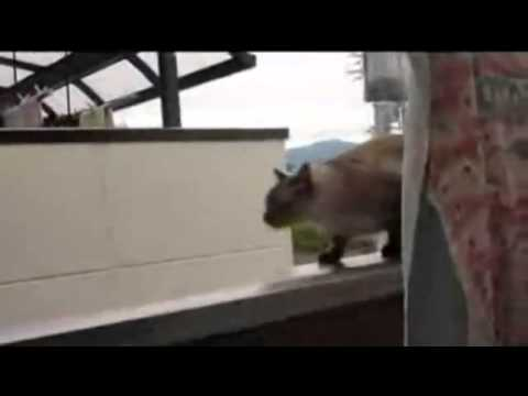 Cat Jump Off Balcony Gif