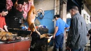 China - Horror market: dog meat in Yangshuo