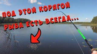 Рыбалка река Оредеж