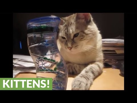 Cat completely mesmerized by bubble timer