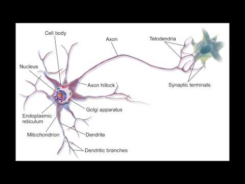 Intelligence Subliminal | Increase your IQ