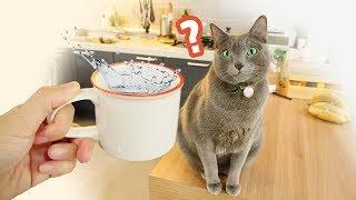 우리집 고양이 물 많이 마시게 하는 법 (신부전증 고양이)