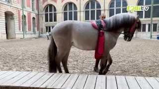 Découvrez l'Academie Equestre de Versailles