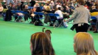 Hembadoon Boxers - DFS Crufts 2010 - Elmo.AVI