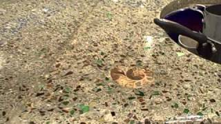 Beer Bottle Glass Concrete Counter Tops
