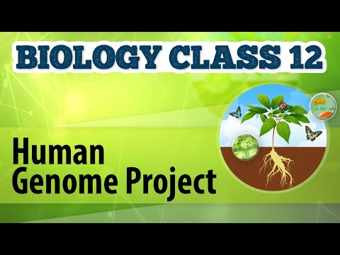 Human Genome Project - Genetic Engineering and Genomics - Biology Class 12