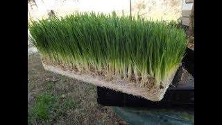 Hydroponic fodder by chetan gaud