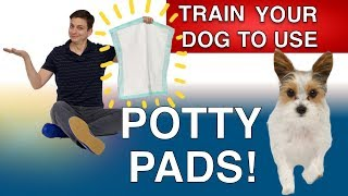 how-to-potty-train-your-dog-with-potty-pads