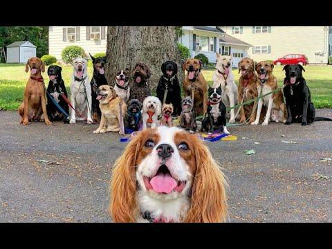 Парень выгуливаюет по собак за 31 января