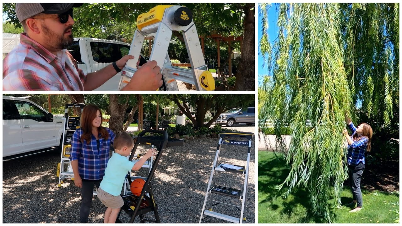 Gorilla Ladder Giveaway & Pruning Our Weeping Willow! 🌿✂️🙌// Garden Answer