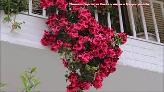 Греция ещё на карантине Весна и природа