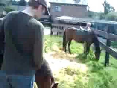 paard rudolf brand